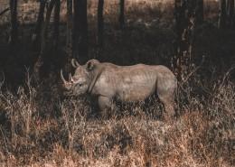 强壮的犀牛图片(12张)