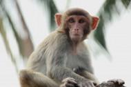 海南南湾猴岛风景图片(17张)