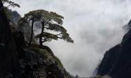 安徽黄山奇松风景图片(14张)