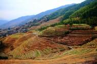 广西龙脊梯田风景图片(9张)