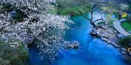 浙江杭州太子湾春天景色图片(8张)