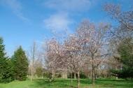 日本前田森林公园的图片(12张)