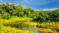 尼泊尔奇特旺皇家公园风景图片(10张)