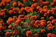 深圳园博园花卉风景图片(17张)
