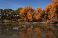 甘南风景图片(8张)