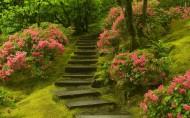 唯美石阶、台阶图片(15张)