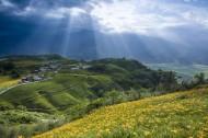 台湾六十石山金针花风景图片(7张)