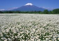 日本富士山春天风景图片(12张)