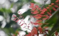 洪湖风景图片(10张)