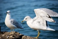 可爱的海鸥图片(15张)