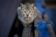 蹲着的猫咪图片(10张)