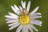 花朵上的蜘蛛图片(7张)