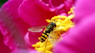 勤劳的蜜蜂图片(13张)