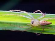微距蜘蛛图片(15张)