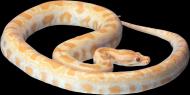 各类蛇的透明背景PNG图片(19张)