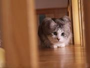 猫咪生活图片(30张)