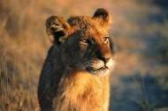 母狮图片(15张)