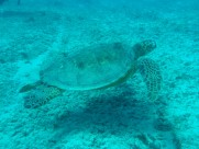 长寿的海龟图片(12张)