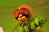 美丽的蜻蜓图片(10张)
