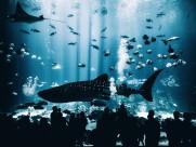 海里的鲨鱼图片(9张)