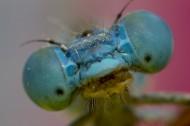 蜻蜓的眼睛图片(10张)