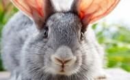 萌宠小兔子图片(14张)