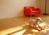 家有斑点狗图片(12张)