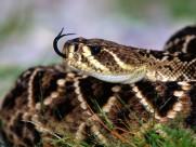 蛇图片(21张)