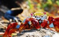 海滩上的螃蟹图片(22张)
