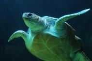 憨态可掬的海龟图片(10张)