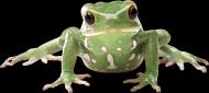 青蛙透明背景PNG图片(17张)