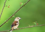四季鸟鸣图片(67张)