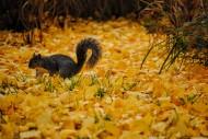 娇小可爱的松鼠图片(12张)