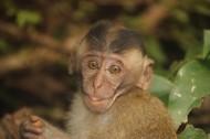 可爱呆萌的猴子图片(15张)