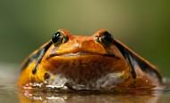 丑陋的青蛙图片(10张)