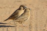 织巢鸟图片(5张)
