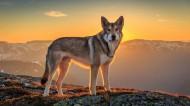 霸气的狼图片(19张)
