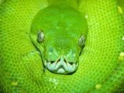 蛇图片(20张)