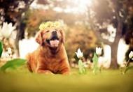 可爱的狗狗图片(12张)