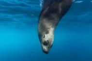 丑萌可爱的海豹图片(10张)