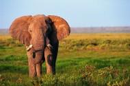 正面大象图片(8张)