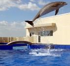 戏水的海豚图片(6张)