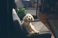 萌萌的宠物狗图片(10张)