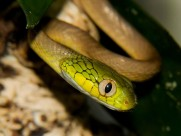 蛇图片(36张)