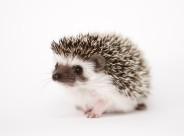 可爱的刺猬动物图片(15张)