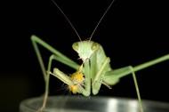 螳螂图片(8张)