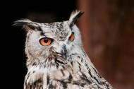 可爱的猫头鹰图片(15张)