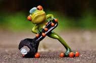 青蛙玩具图片(11张)