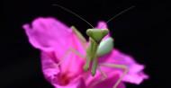螳螂图片(13张)