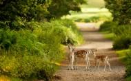 森林里的鹿图片(24张)